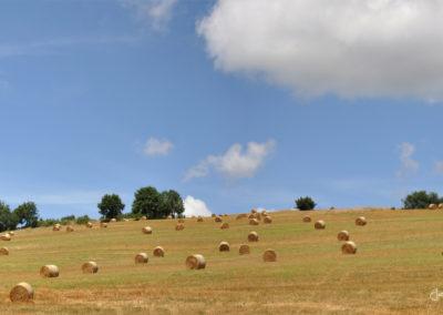 L'agriculture sur les coteaux